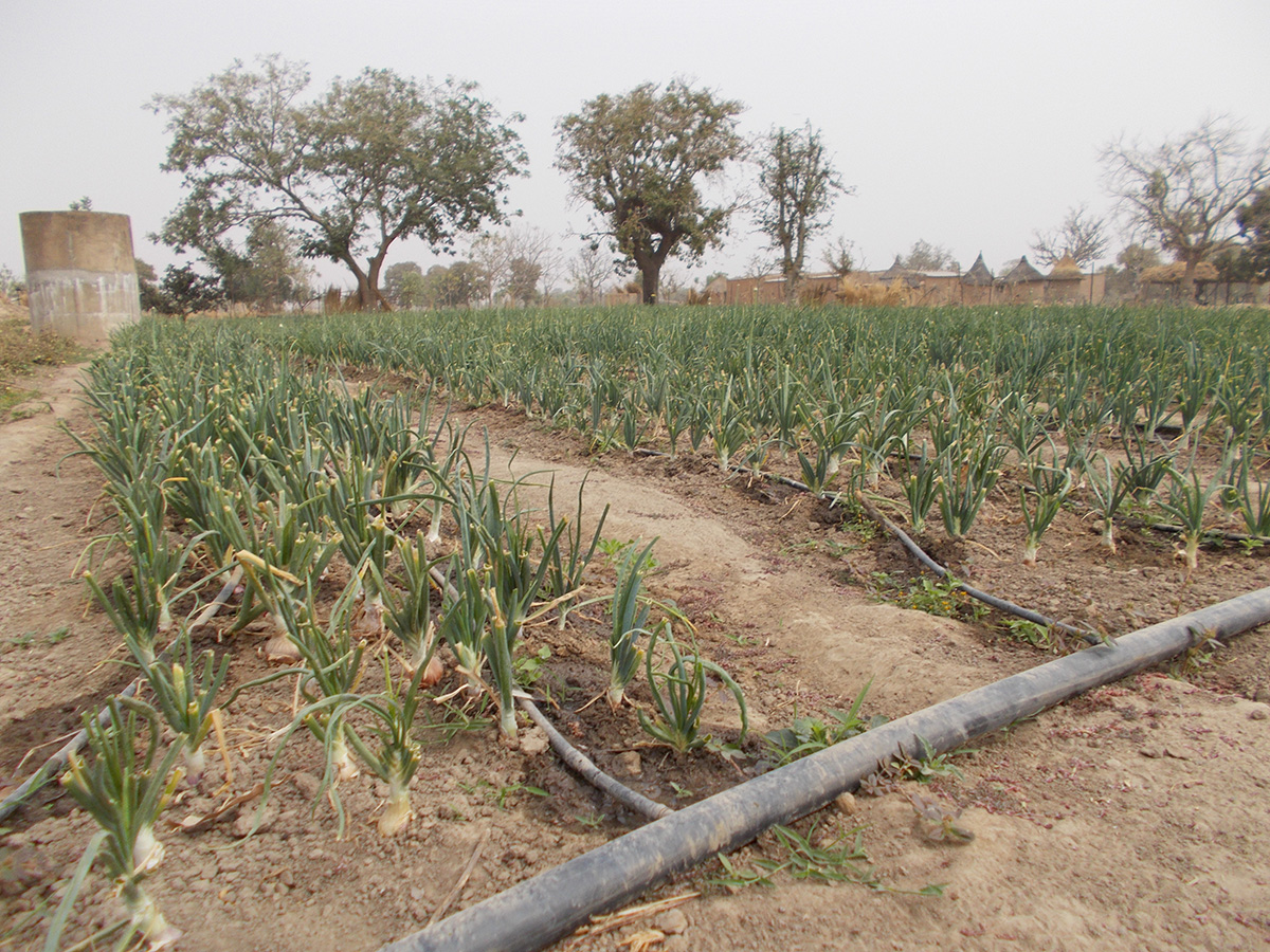 Support an irrigation or well project in Burkina Faso